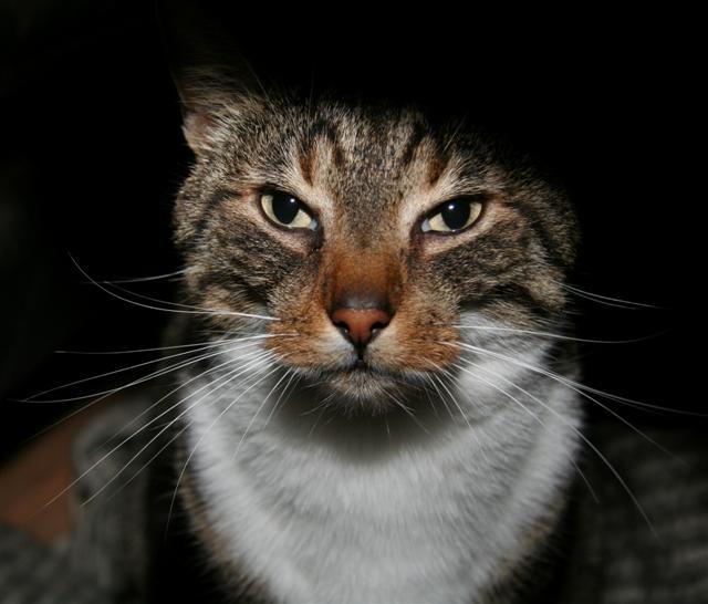 Katten Magnus