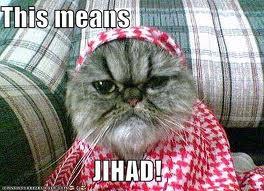 jihad cat